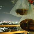 夜景と干物
