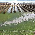 牡蠣ひびの広がる海岸