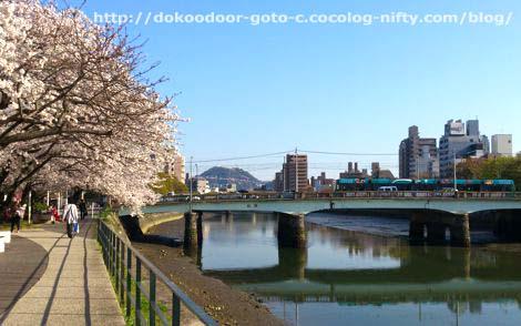 川沿いの桜と市内電車
