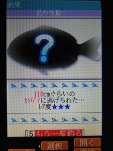091105kanpachi